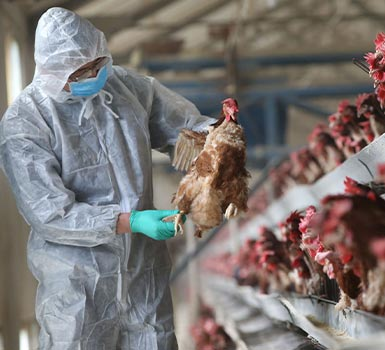 Bird Flu cases are emerging, is it a nasty bird flu outbreak?